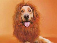 Kostyme til hund Image