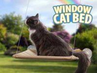 Katteseng til vinduet Image