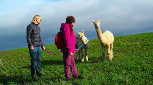 Alpakkavandring for to - Opplevelsesgave Image