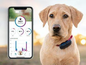 Tractive GPS-tracker til hund Image