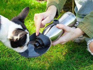Utenu vannflaske til hund Image